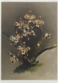 reichenbachia: orchids illustrated and described by joseph mansell