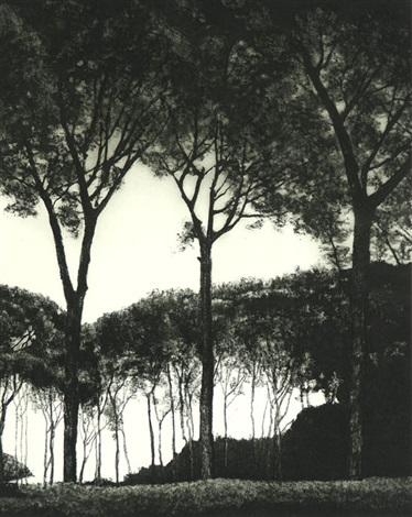 light through trees by april gornik
