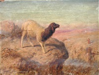 an awassi sheep on a mountain top in the holy land, an arab figure beyond by william j. (webbe) webb