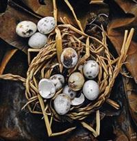 鸟巢 by liu qun