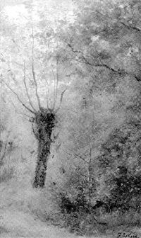 weidenbaum by federico cortese