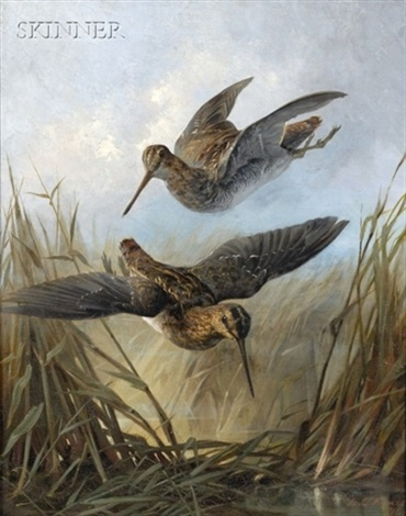 woodcocks in dropping flight by lawrence carmichael earle