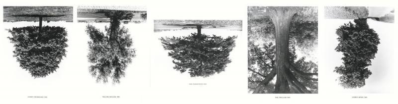 flanders trees portfolio of 5 by rodney graham