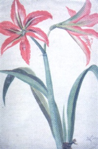 an amaryllis by w. lambert