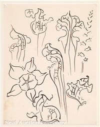 pitcher plants by walter inglis anderson