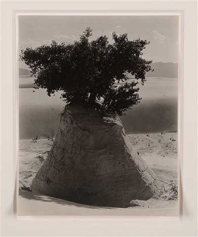 white sands new mexico by edward weston