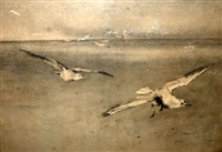 gulls over a coast by minna bolingbroke