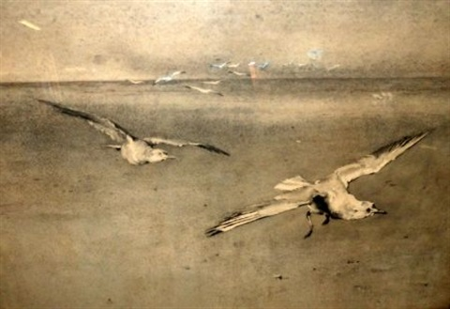 gulls over a coast by minna bolingbroke