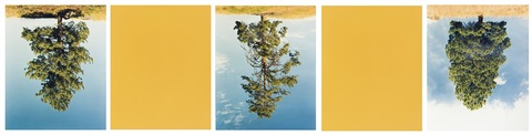 ponderosa pines princeton bc cat hi way yellow in 5 parts by rodney graham