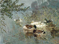 ducks in the reeds by adolf lins
