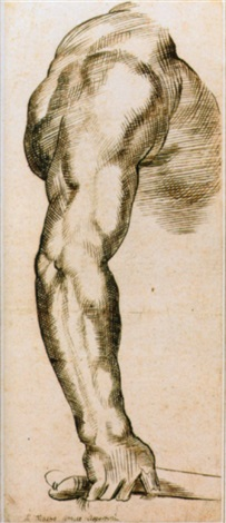 a muscular arm by amico aspertini