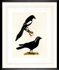 jackdaw magpie by prideaux john selby