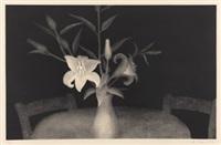 lilium candidum by erika hegewisch