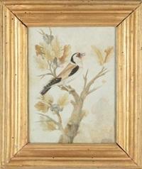uccellino su ramo by pier sante cicala