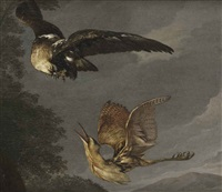 a golden eagle and a bittern in flight by carl borromaus andreas ruthart