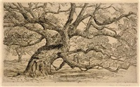 live oak tree at charleston by alice edith rumph