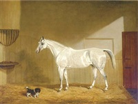 a grey hunter and spaniel in a loose box by james (of bath) loder