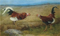 the cock-fight by maud earl