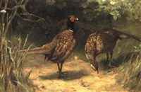 pheasants by arthur duke