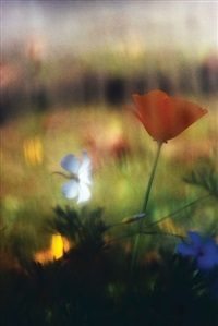 A Dreamy Anemone