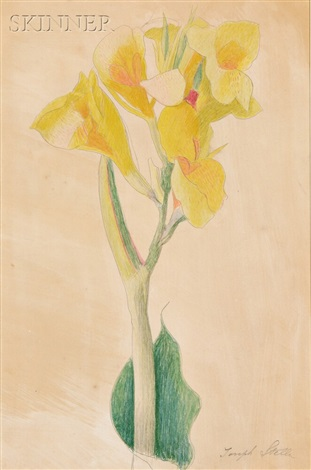 yellow alstroemeria by joseph stella
