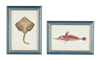 fish (20 works from a history of the fishes of the british isles) by jonathan couch