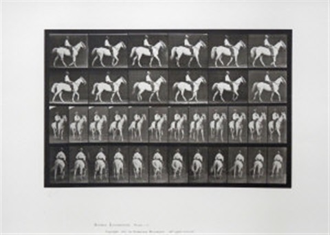 animal locomotion elberon walking saddled by eadweard muybridge