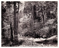 tenaya creek, dogwood, rain, yosemite national park, ca by ansel adams