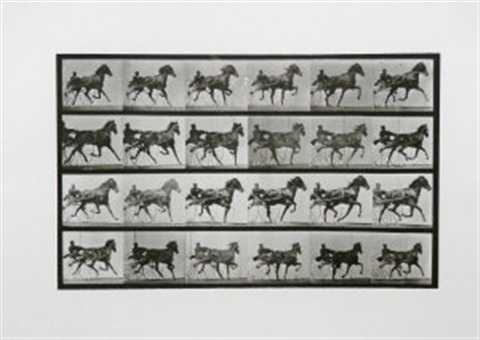 animal locomotion nellie rose trotting harnessed to sulky by eadweard muybridge