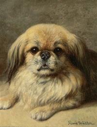 portrait eines pekinesen by renz waller