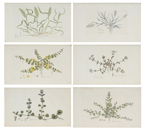 botanical plates 23 33 45 93 122 134 from flora londinensis 6 works by william curtis