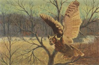horned owl by peter darro