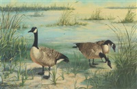 canadian geese by peter darro
