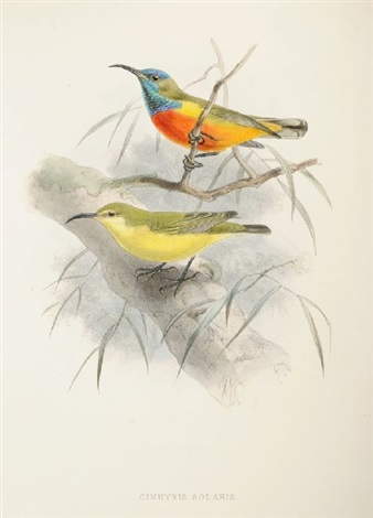 a monograph of the nectariniidae or family of sun birds bk by captain george ernst shelley w12 works colored by w hart by johannes gerardus keulemans