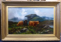 highland cattle in a misty landscape by douglas cameron