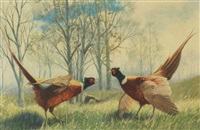 pheasants by peter darro