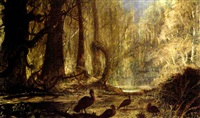 a flock of turkeys in the forest by john antrobus