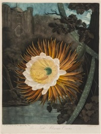 the night-blowing cereus, plate b (the flower after reinagle, moonlight after pether) by robert dunkarton