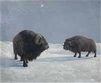 bison in a snowy landscape by arthur radclyffe dugmore