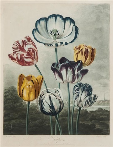 tulips after reinagle by richard earlom