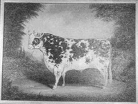 portrait of black and white cow in landscape with red halter by amos shontz