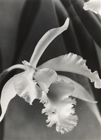 orchidee by max baur