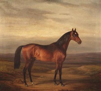 a young brown stallion by herman freese