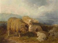 widder und schafe im schottischen hochland by william r.c. watson