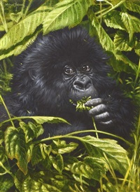 young mountain gorilla, varunga mountains, rwanda by michael jackson