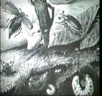 die entwicklung des maikafers (um 1920) by josef fleischmann