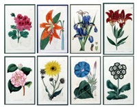 botanical (+ 7 others; 8 works) by pierre bouchoz