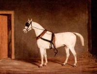horse on harness by james (of bath) loder