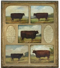 studies of prize winning red devon cattle: the duke of flitton, gained the first prize for the best old bull, and the gold medal as the best male devon in the show yard; temptress, the 1st prize for the best cow and the gold medal as being the best female by j. bailey