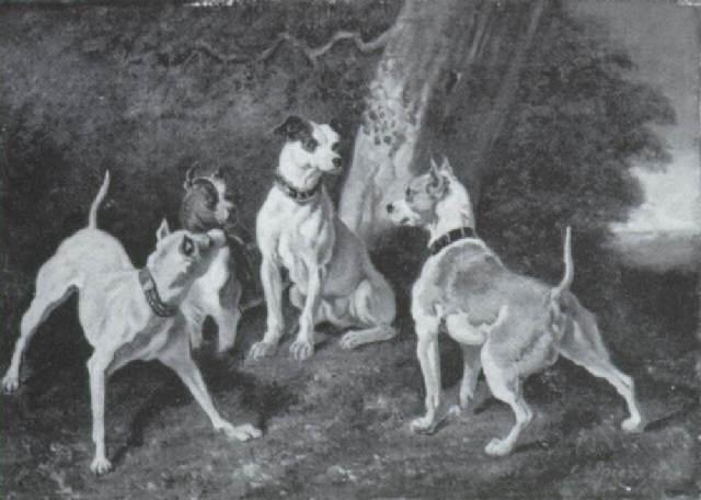 paesaggio con quattro cani by o spiers